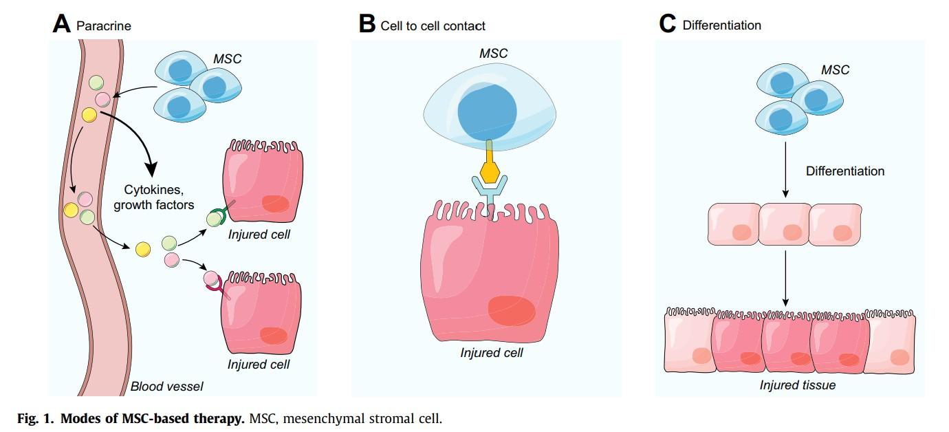 幹細胞が細胞になる様子